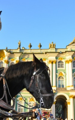 No horsing around at the Hermitage